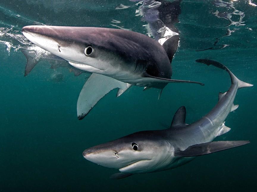 Atlantic Shark Institute Impact