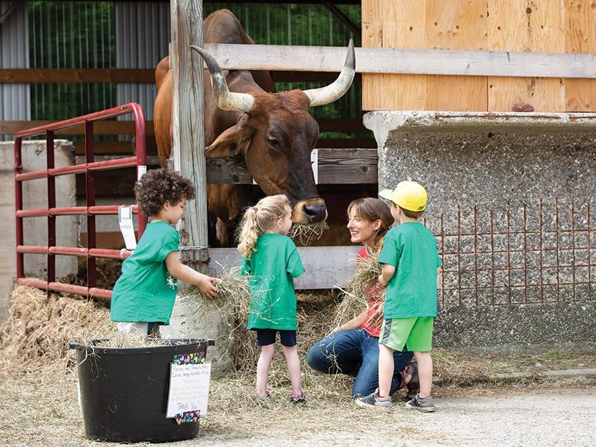 Retreat Farm Impact