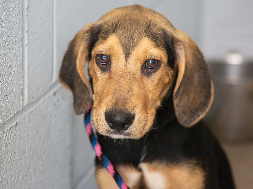 SPCA of Westchester, Inc. Impact