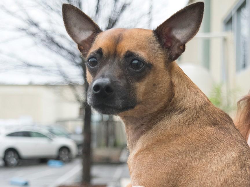 Placer SPCA Impact