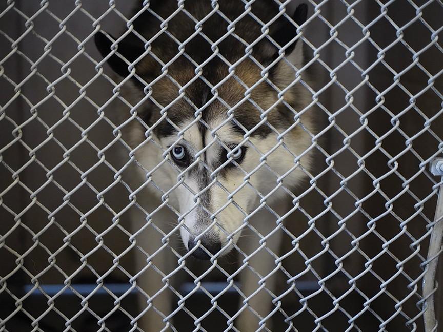 City of Sacramento Front Street Animal Shelter Impact