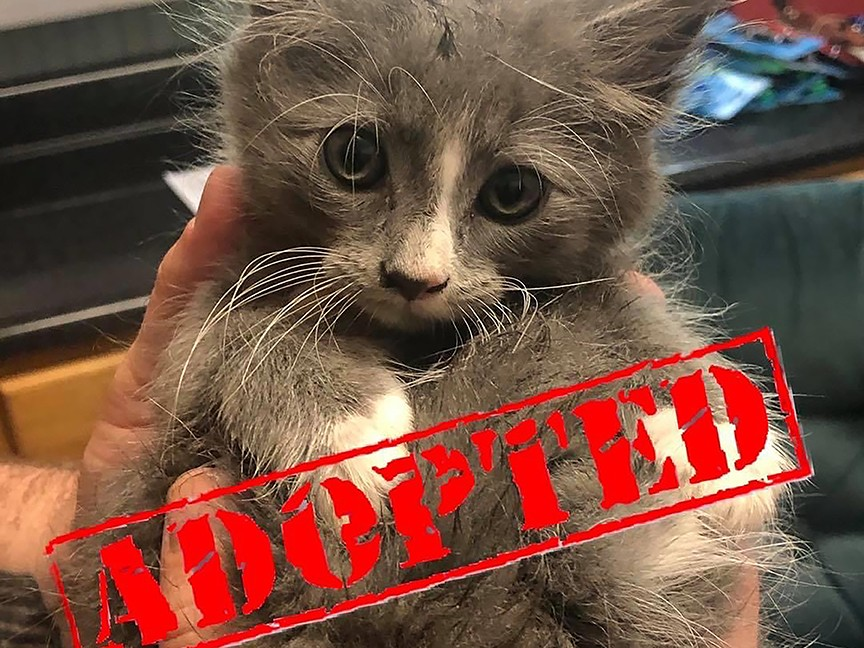 Little Victories Animal Rescue Group Impact