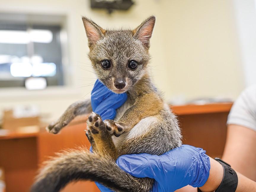 Austin Wildlife Rescue Impact