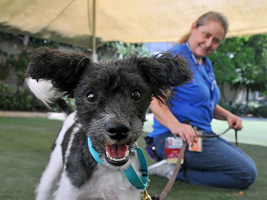 San Diego Humane Society and SPCA Impact